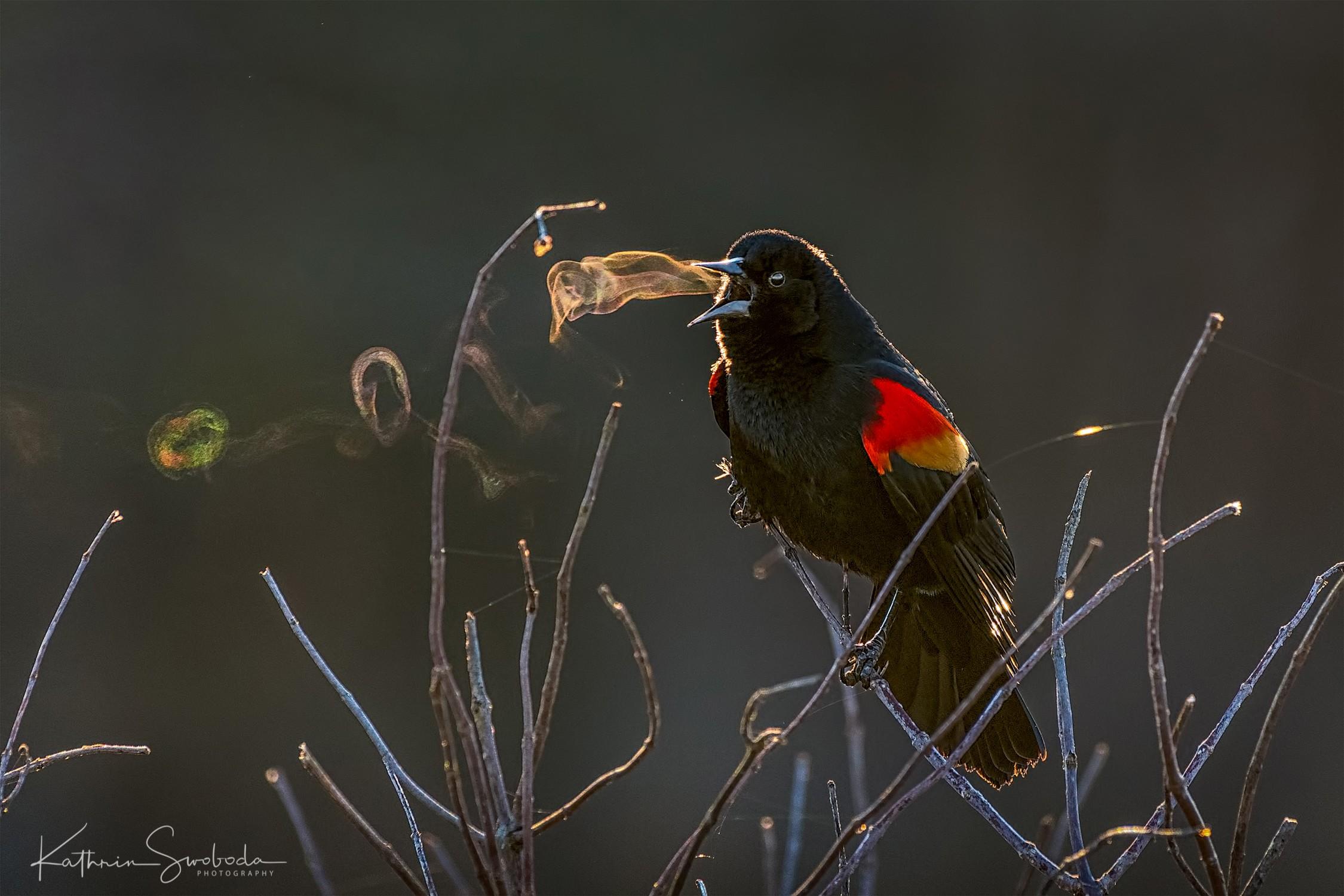 2019 Audubon Grand Prize Winner