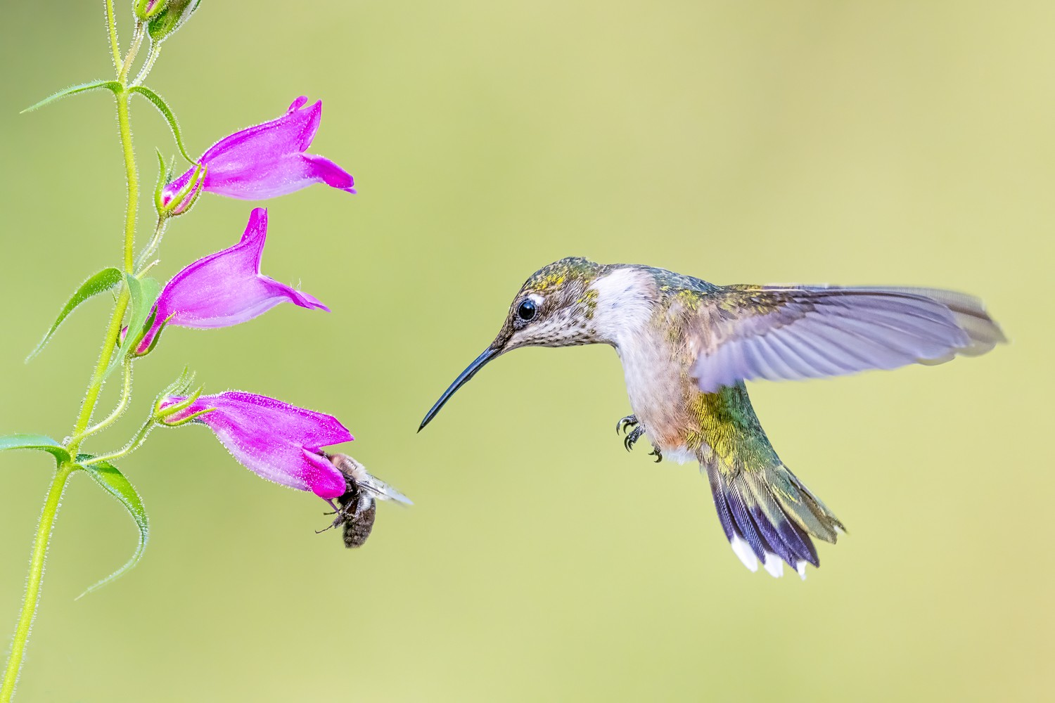 Hummingbird and Bee